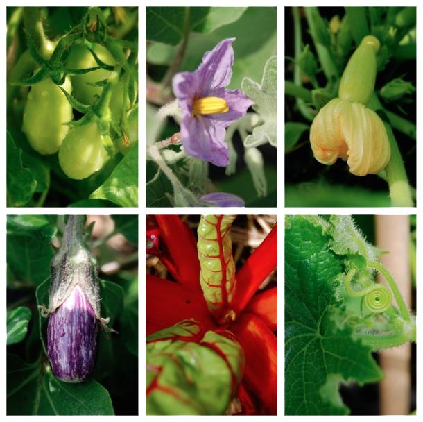 Baby vegetables at community garden.