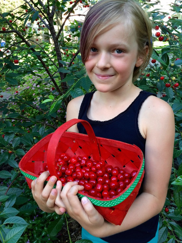 Picking Cherries in the Yard